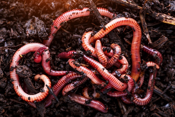 Wonderful Worms! Educational Resources K12 Learning